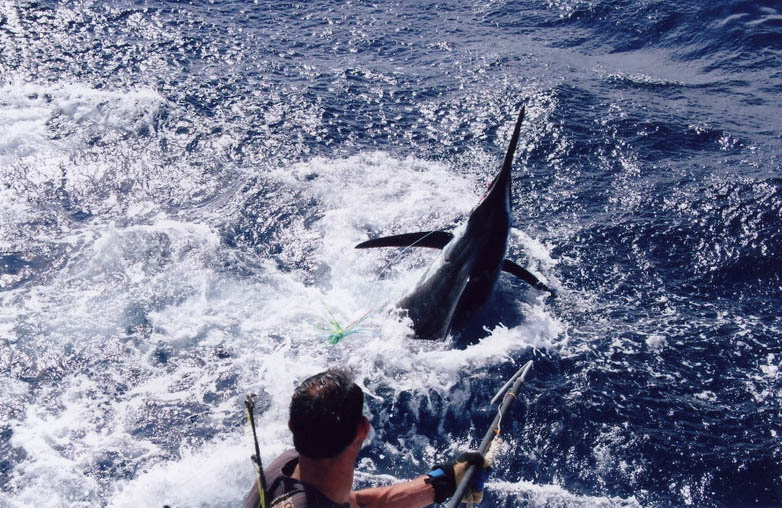 Blue Reef Fishing Charters